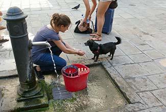 Η Βενετία είναι φιλική για τους σκύλους;