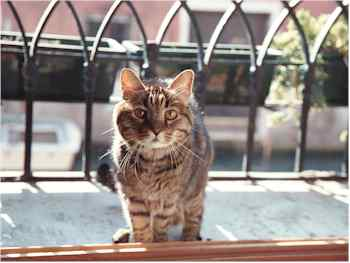 Neno: Venice's oldest cat?